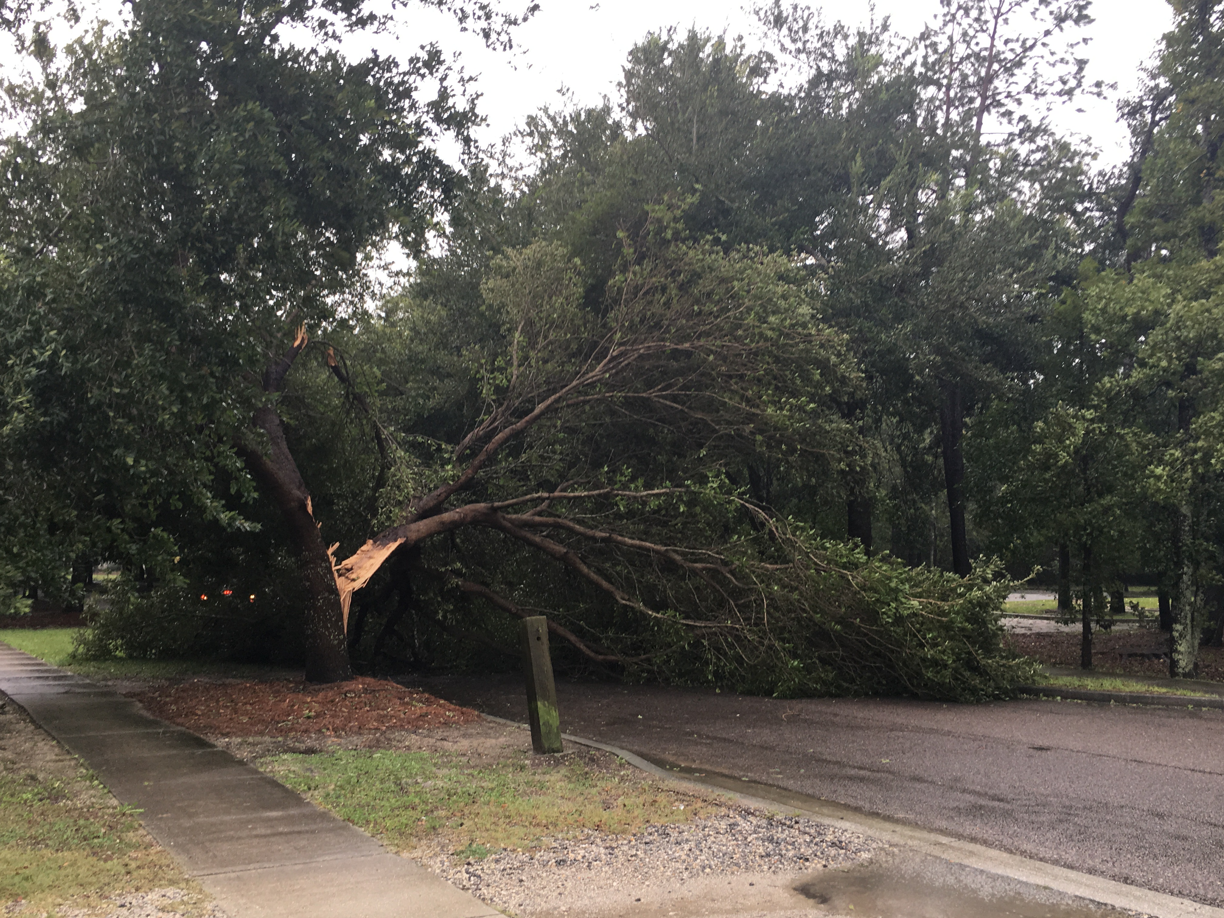A downed tree on Etiwan Park Street near Bishop England High School.